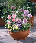 Fritillaria, Primrose, Tulipa