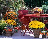 Autumn balcony, Dendranthema, Calluna, Brassica, Dahlias