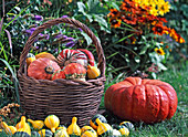 Basket with cucurbita (ornamental squash)