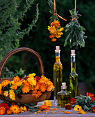 Calendula marigolds, Tropaeolum nasturtium, Salvia sage, flowers