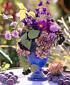 Aster-Herbstaster, Callistephus-Sommeraster, Delphinium-Larkspur, Hydrangea