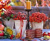 Sorbus, Rose Rosehip, Malus, Helianthus