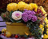 Chrysanthemum chrysanthemums, Brassica cabbage, Hedera ivy, Thymus