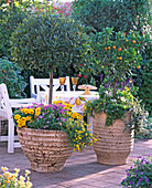 Mediterrane Terrasse: Laurus / Lorbeerbaum, Citrus mitis
