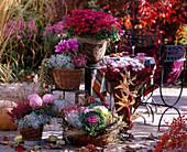 Chrysanthemum, Calocephalus, Brassica, Erica and Calluna