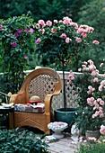 Rose 'Piroschka', 'Bonica' (stem and shrub rose)