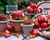 Apples and ornamental apples peppered with cloves (apple decoration)