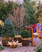 Place the trees in the bucket in larger baskets, fill the gaps with straw-picea