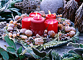 Metal tray with salix (willow), juglans (walnut), star anise