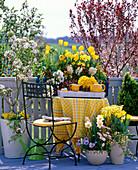 Prunus (blood plum), Malus (ornamental apple), Tulipa (tulip), Narcissus