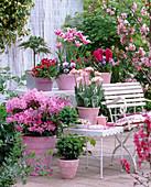 Rhododendron 'Graziella', Tulipa 'Claudia', 'Carnival of Nice'