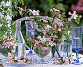 Malus (apple) flowers and branches as table decoration