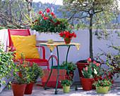 Tulipa (tulip), Bellis (daisies), Euphorbia (milkweed)