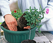 Plant hanging baskets