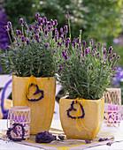 Lavandula 'Dwarf Blue' lavender in yellow pots, lavender hearts