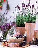 Lavandula 'Dwarf Blue' (lavender), plants, posyches, soaps