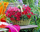 Antirrhinum (snapdragon) in the basket