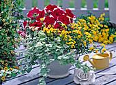 Petunia Dreams 'Picotee Red' (Petunia), Nemesia Sunsatia 'Lemon'
