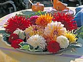 Dahlia (cactus, jewelery and ball dahlia)