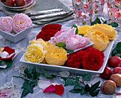 Rose (English scent rose) in square bowls