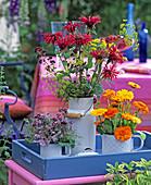 Calendula (Marigold), Monarda (Indian Nettle)