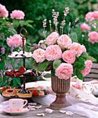 Pink 'Eden Rose' (Nostalgia Rose)