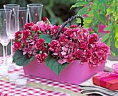 Hydrangea, Dianthus (carnation)