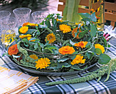 Calendula officinalis and 'Kablouna Mix' (Marigold)