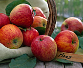Malus 'Piros' (apple), especially healthy and tasty