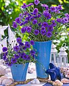 Centaurea cyanus / Kornblumen maritim in blauen Vasen