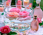 Rosa 'Mary Rose', 'Charles Austin' (English fragrance rose)
