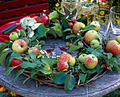 Malus (apple) wreath on clematis blank