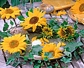 Tin bowl with Helianthus annuus (sunflower)