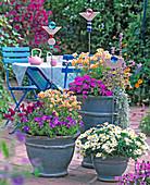 Argyranthemum / Margeriten, Nemesia 'Mango' / Elfenspiegel