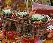 Brassica (ornamental cabbage), pink (rosehip), malus (apple), autumn leaves