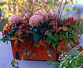 Chrysanthemum (Deco-Crysanthemum, Fragaria (strawberries, Capsicum (ornamental paprika)