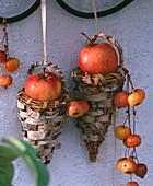 Malus (apple, ornamental apple), hanging baskets with birch bark