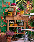 Calluna 'Melanie' - 'Annette' heath, Brassica cabbage, Buxus book, Cucurbita
