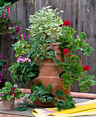 Pocket amphora with scented geraniums