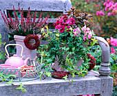 Calluna summer heather, Hedera ivy, Viola horned violet on a bench