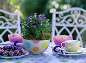 Viola odorata (scented violet) in dotted glass bowl