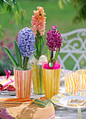 Hyacinthus' Blue Jacket ',' Gipsy Queen ',' P. Sensation'