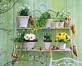 Galanthus (Snowdrop), Primula (Primrose)