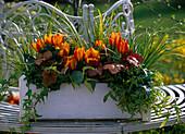 Tulipa 'Flair' (Tulpen), Acorus 'Ogon' (Goldkalmus)