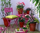 Camellia japonica (camellia), myosotis (pink forget-me-not)