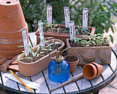 Seedlings in clay boxes, clay pots, sprayers