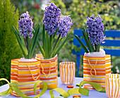 Hyacinthus 'Blue Jacket' (Hyacinth)