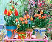 Tulipa, filled, orange and red-yellow tulips