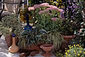Sedum spectabile, Campanula, Carex hachijoensis 'Evergold'