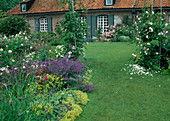 Lawn path leads through rose arch with roses to the house, bed with Alchemilla, Nepeta